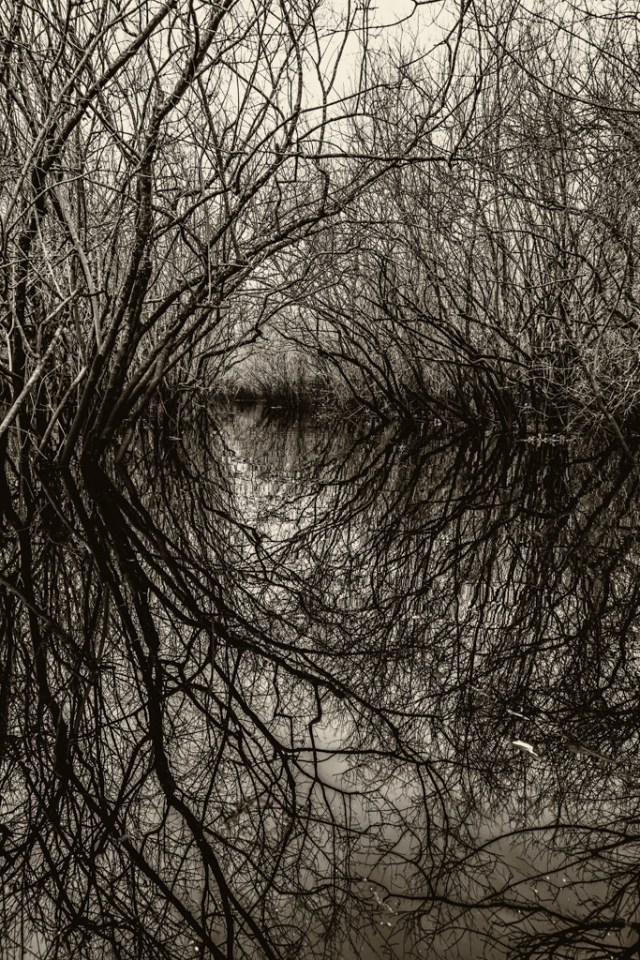 Henderson lake swamp photography