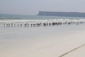 Gorgeous Beach in Duqm