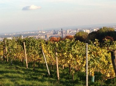 Photo of vineyard with city of Vienna in background