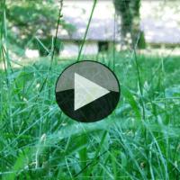 Mowing an Ozarks Lawn