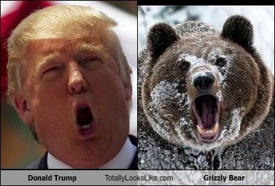 Of Bears and Presidents.