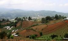 Chiang Mai, Muntii de Orez