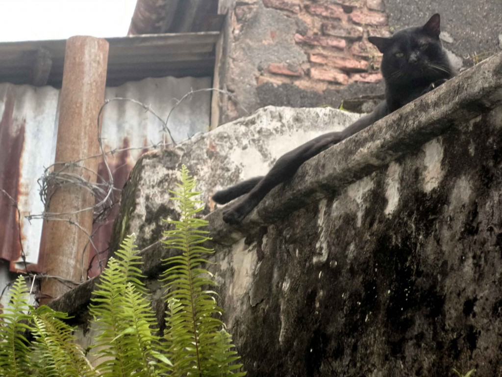 cat on a wall in George Town, Penang
