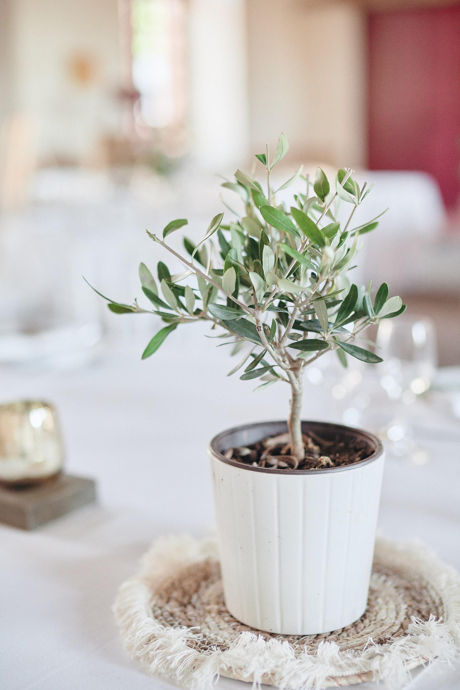olivier en décoration de table des mariés