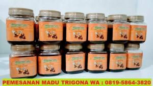 madu-asli-trigona