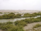 Mangroves and desertification