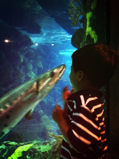 Eating fish while watching fish (Downtown Denver Aquarium, Colorado)