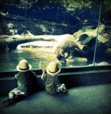 Family trip to Singapore at the Singapore Zoo
