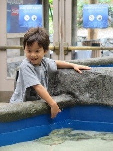 touch a stingray at point defiance zoo