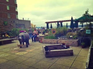 Urban secret garden at pike place market