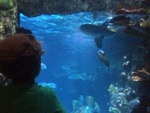 shark feeding at the point defiance zoo
