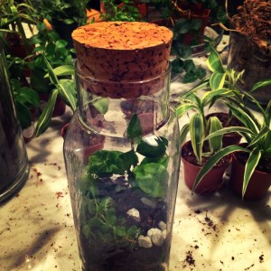 terrarium from Glasswing shop