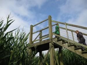 bridge in the corn maze