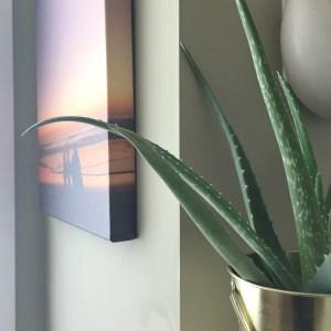 Aloe Vera plant from ikea