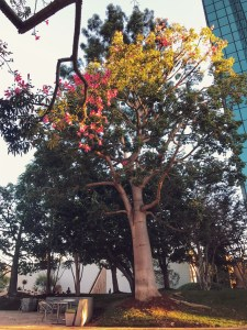 Think about your purchases in a really gorgeous Noguchi Garden at South Coast Plaza