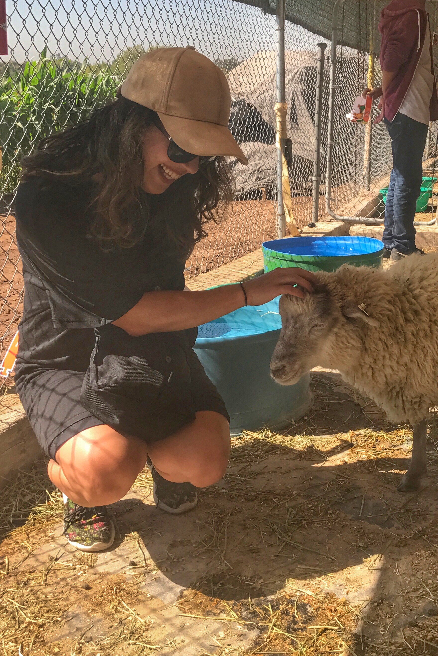 Farm animals and sheep at Tanaka Farms in Irvine California