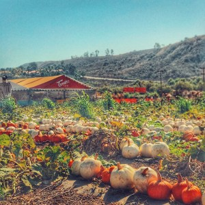 Visit Tanaka Farms in Irvine California with your family to find out more about where your food comes from