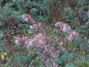 Flowers,  unidentified, September 2012