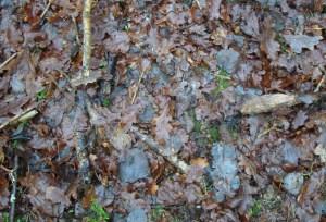 Leaf, oak, December 2012