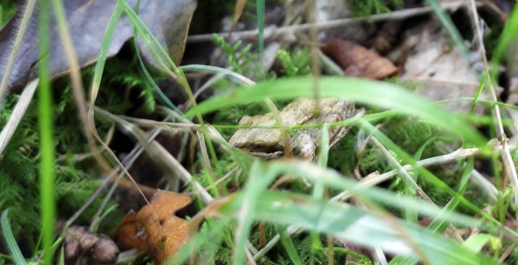 Amphibian, Frog, September 2014