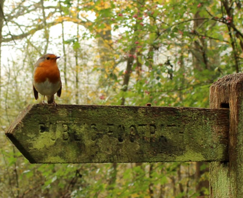 Bird, Robin, November 2014