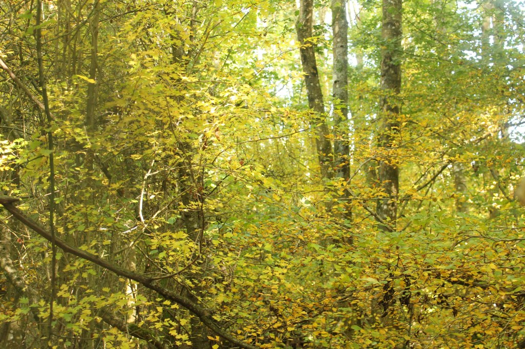 Trees, Hawthorn, October 2016