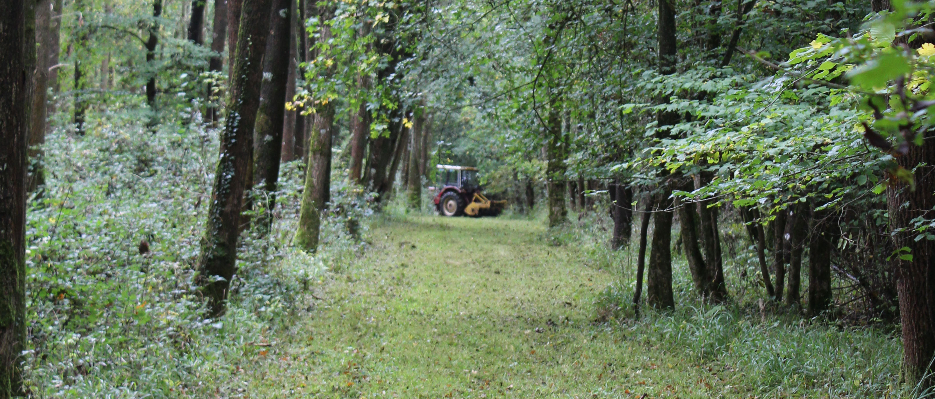 Woodland management, rides, October 2017