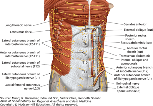 Sonoanatomy Relevant For Ultrasound Guided Abdominal Wall Nerve