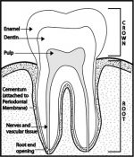 Chapter 4 – Dental Emergencies