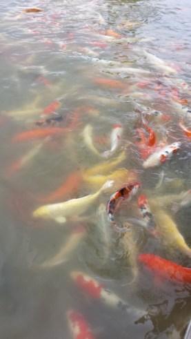 Floating market karper