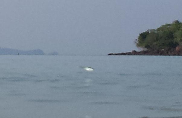Koh Talu Pearl Bay fra vandet fisk hopper4 (beskaret)