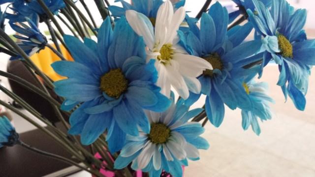 Blaa blomster med hvid2