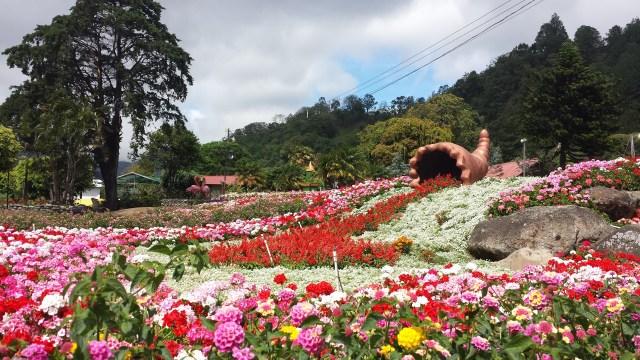 Blomsterpark i Boquete4