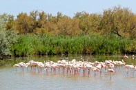 Huge brackish lagoons shelter more than 400 bird species -- including flamingos.