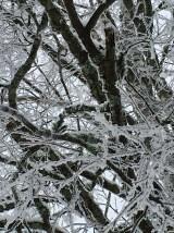 A tangle of tree limbs creates a Rorschach inkblot test.