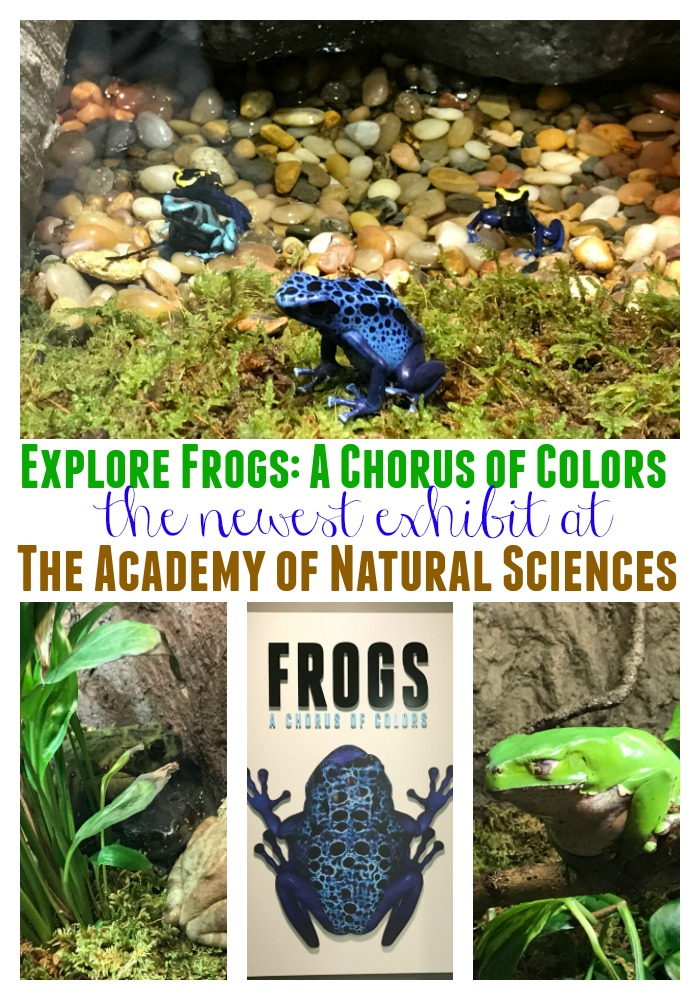 Frogs: A Chorus of Color at the Academy of Natural Sciences