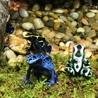 Frogs: A Chorus of Color