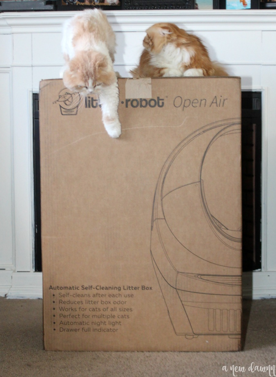 Litter robot box with cat on top of it