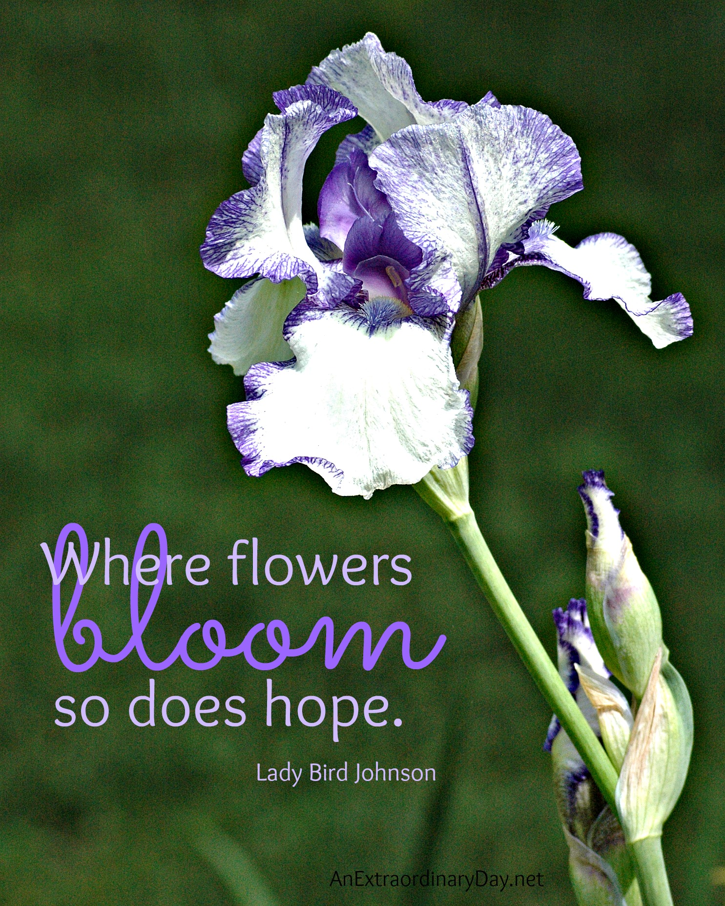 Bloom Quotes Quotes About Blooming Flowers Picture