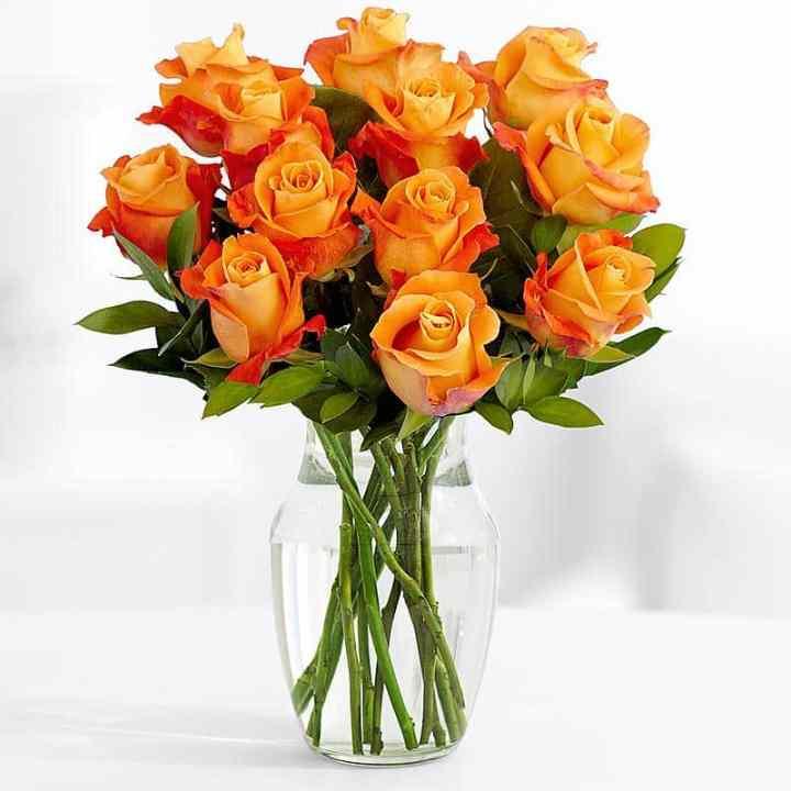 11 Длинных Оранжевых Роз