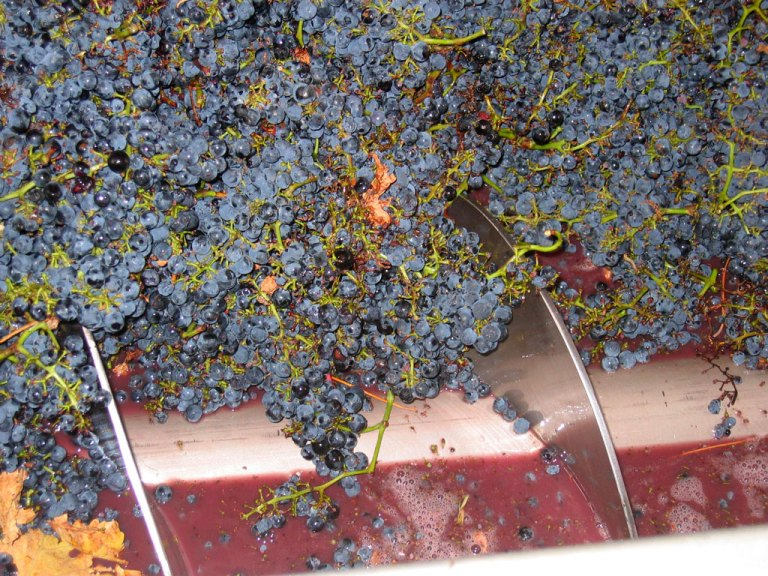 Angas Plains Wines - crushing the grapes