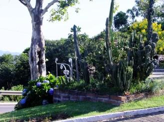 Os cactus de Anelise Bredow ®SKLindemann