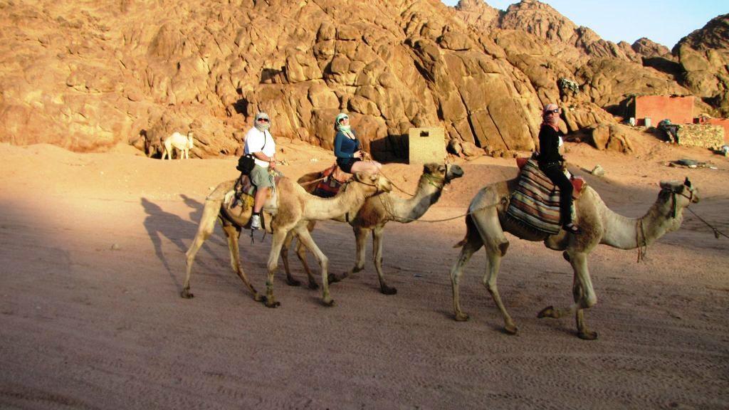 Egipt. pe cămilă