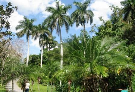 Vinales - Cuba