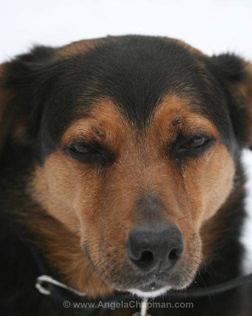 Jasper handsome