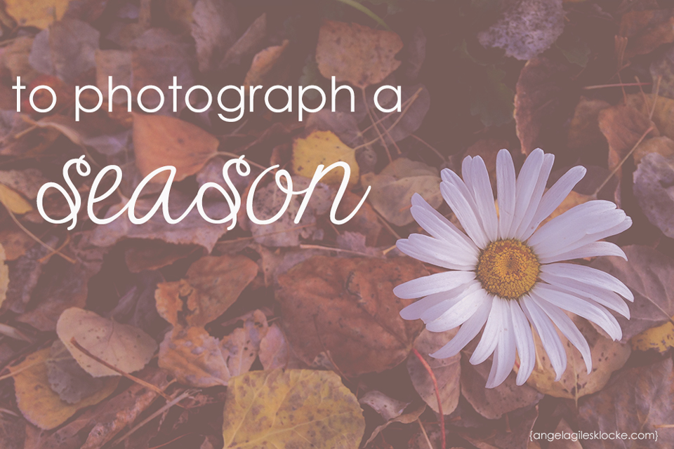 To photograph a season by angelagilesklocke.com