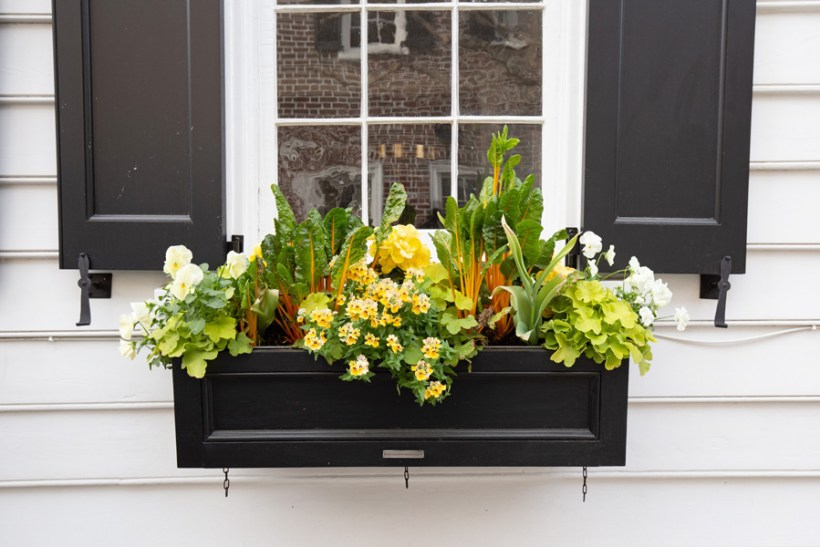 black flower window box with yellow and green plants and flowers