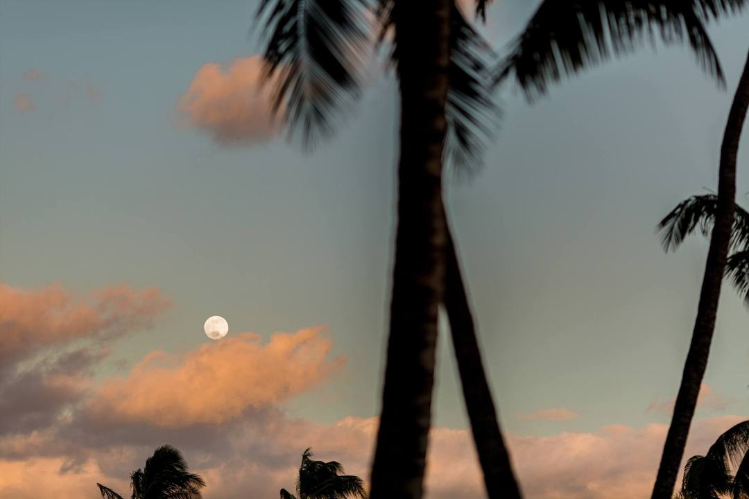 Full Moon at sunset and palm trees