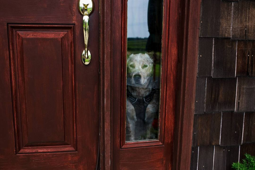 dog waiting for bride at house
