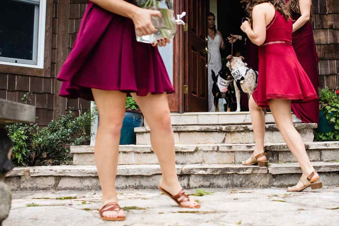 bridesmaids leaving house with dogs